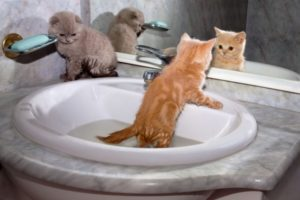 Kittens in Sinks